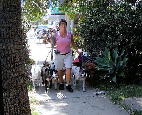 Dog Walker in Ocean Beach (coming)