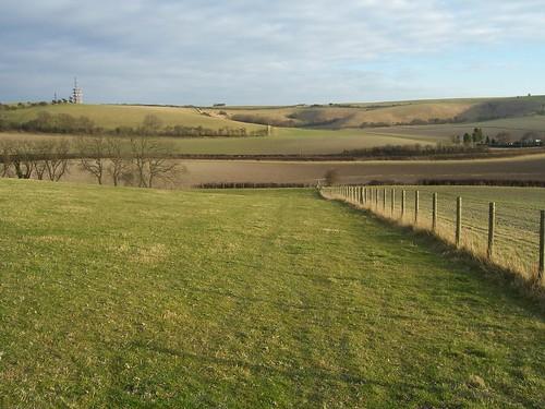 Grassy fields