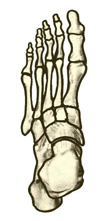 Diagram of Foot Bones | Flickr - Photo Sharing!