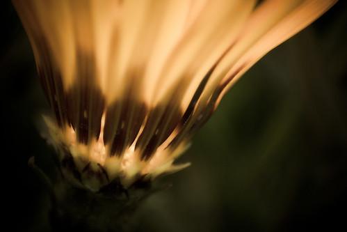 Eternal Sunshine of the Inner Self