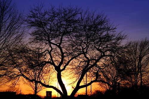 sunset shadow red sky sun tree colors blu annarbor