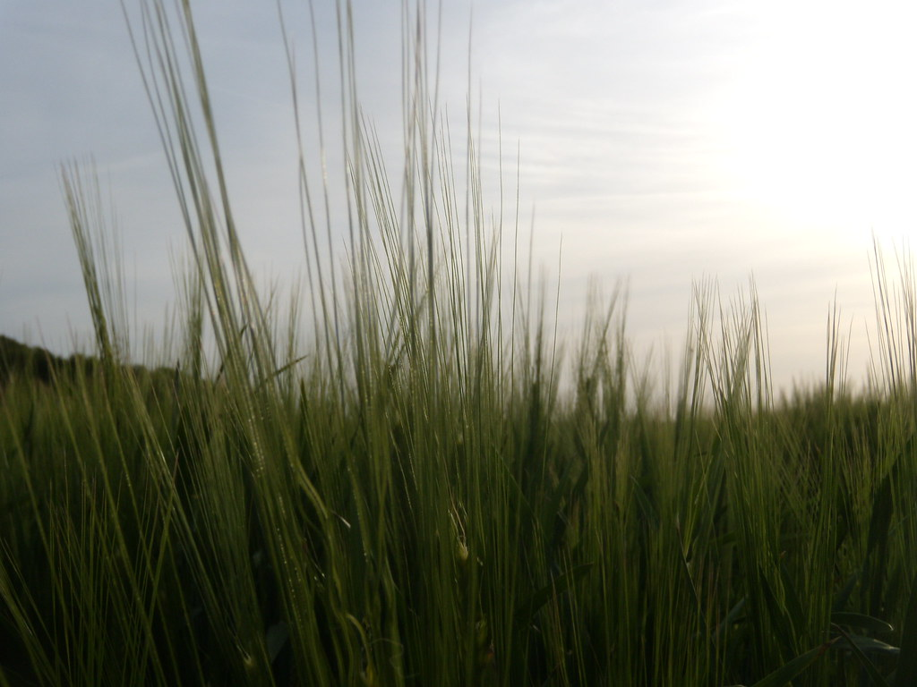Barley Pluckley Circular with extension
