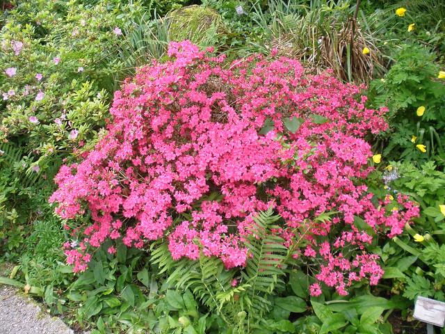 Regensburg Bavaria Germany Blumengarten Jard N De Flores Flower Garden Jardin Des Fleurs