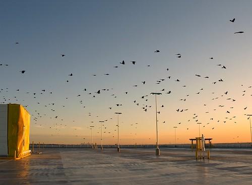birds geotagged airport bush texas tx flock houston aeroporto flughafen aeroport intercontinental iah aerodrome kiah mdlphotoz