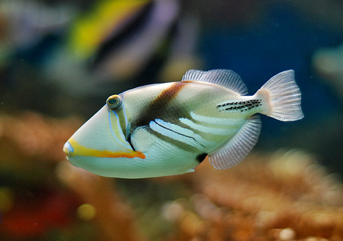 Jb girl friend for Jb tropical fish
