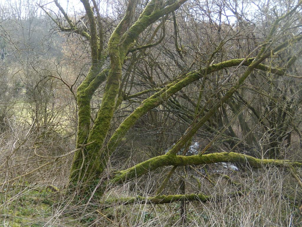 green tree Petersfield to Liss