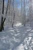 Pfad durch den verschneiten Wald