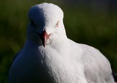 Birds 08042009 466