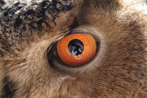 In The Eagle Owl's Eye