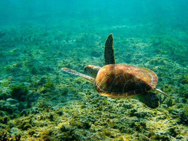 Vedenalainen kilpikonna