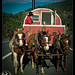 1000 Americans: Dakota & his horses
