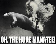 huge manatee