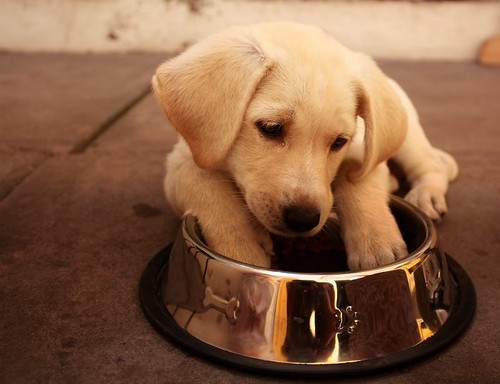 Tại sao động vật đôi khi lại ăn … phân của mình?