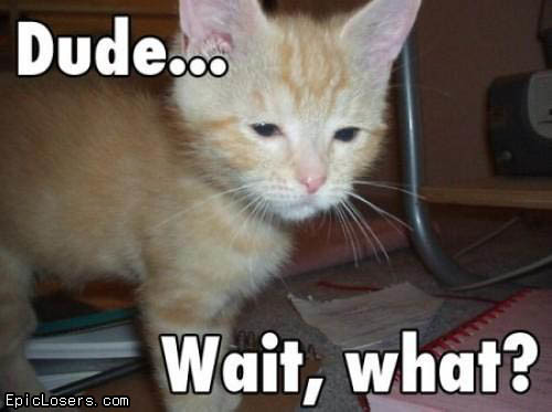 Dude... Wait, what? - LOLCats