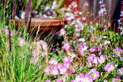 flowers grass birdbath explore nikkor50mm18 nikond80