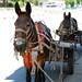 2 donkeys in the shade