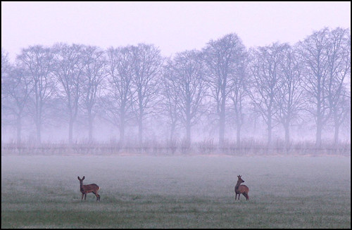 The Deers in the fog
