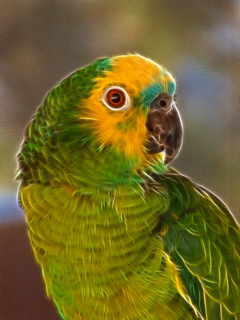 my pet animal parrot Individuals with depression or anxiety register animals as emotional support animals allowing you to keep your animal and avoid pet deposits and fees.
