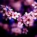 Bloom by jwill9311