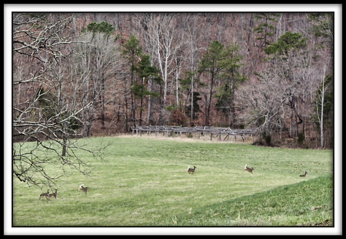 field virginia spring meadow deer whitetail scottcounty