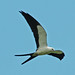 Swallow-tailed Kite - Photo (c) Jerry Oldenettel, some rights reserved (CC BY-NC-SA)