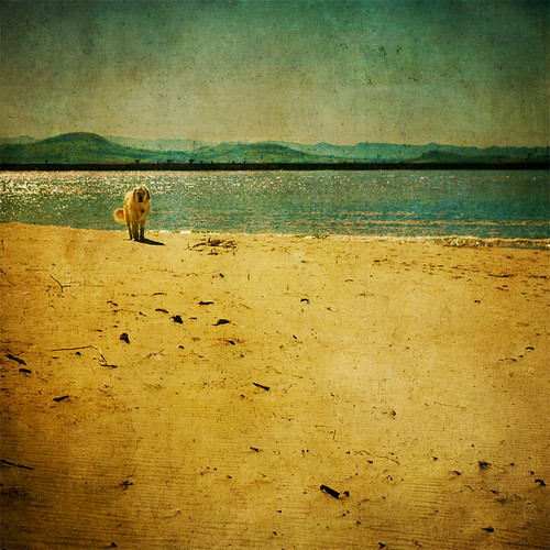 shadow sea summer dog beach square gold sand lab labrador nz otago aramoana bsquare firstquality thelittledoglaughed thankstopaulforoneofthetextures andfortheinspiration ©borealnz