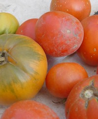 potato and tomato genus, tomato, produce, fruit, food,
