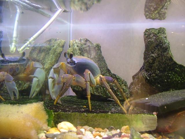St Louis City Museum Aquarium Flickr Photo Sharing