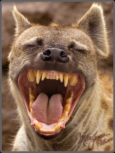 The Hyena That Saw Jill Naked!