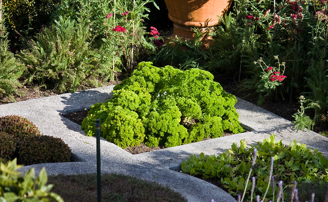 Italian herb garden Explore cynicalviews photos on