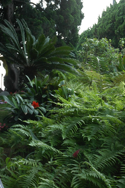 Red Flower Within The Many Ferns Meditation Garden Self Realization Fellowship Encinitas