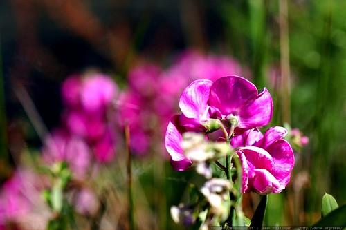 flowers blooming alongside lake oswego    MG 6583