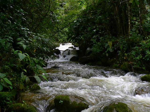 Imagen de una Quebrada en la Reserva Loro Coroniazul, Genova, Quindio