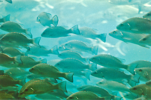 fish spring underwater florida homosassasprings aquaticwildlife