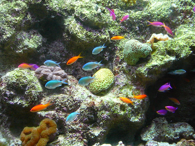 Colorful coral reef fish | Flickr - Photo Sharing!