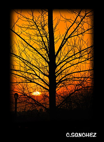 park trees winter orange love by seasons pics branches meadow inspired parks silhouettes sunsets romantic nights 1001 flushing flickrestrellas qualitypixels