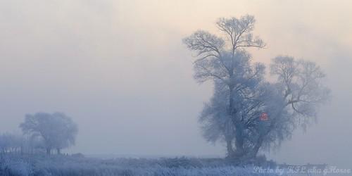 tree sunrise jilin 吉林 wushongisland 雾从岛