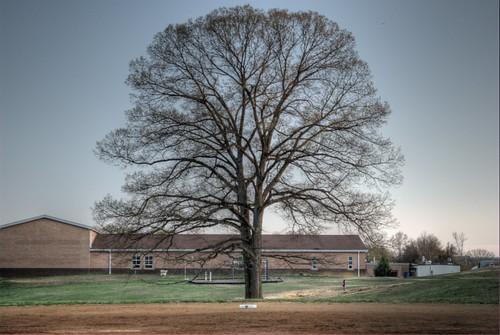 tree nikon jonathan 365 hdr d60 photomatix gagle jhgagle jonathangagle