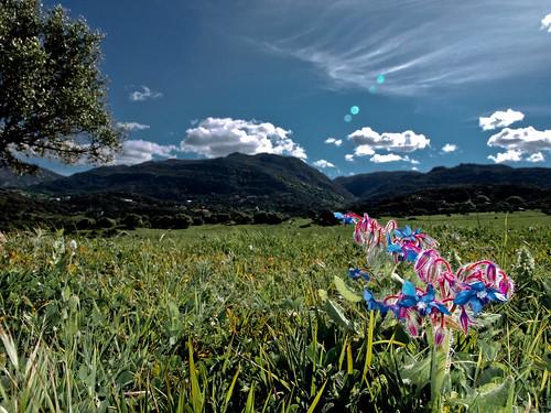 naturaleza andalucía spain flor cádiz campodegibraltar losbarrios laisladelosdespropositos