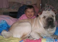 dog breed, animal, dog, pet, shar pei, carnivoran,