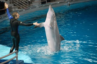 See the dolphins play at the Dolphinarium  - Things to do in Batumi