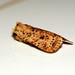 Small photo of [2260] Dotted Chestnut (Conistra rubiginea)