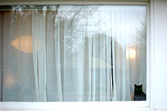 window treatment, decor, textile, window, curtain, window covering, interior design,