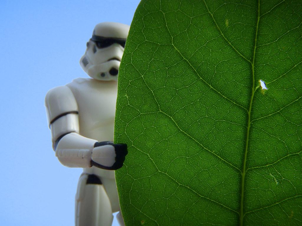 Leaf No Man Behind