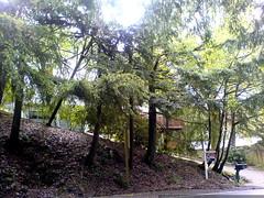 home for sale in lake oswego, oregon   DSC02887