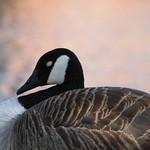 bird7-flickr