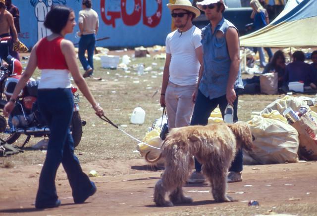 Warner Robins Dog Boarding Noahs
