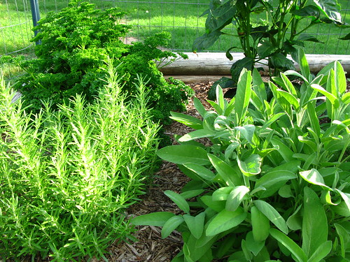 Growing herbs outdoors tips for better crops gardeners tips - Tips planting herbs lovage parsley dill ...