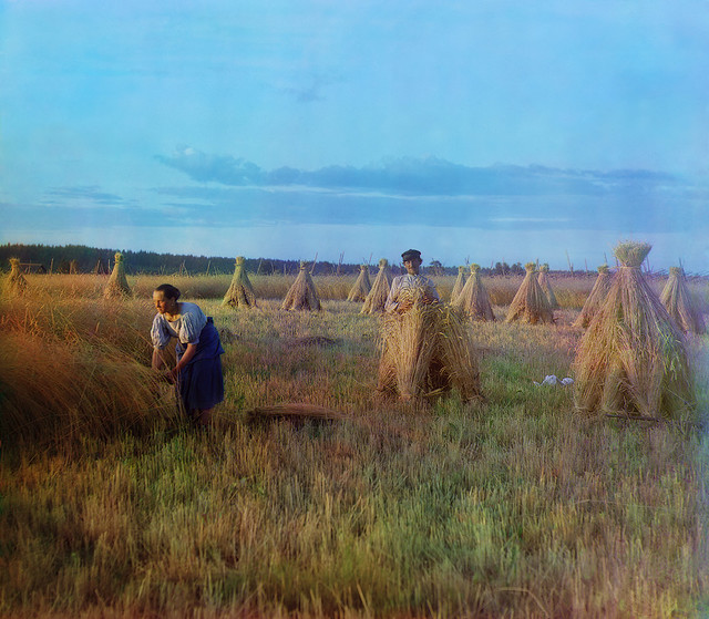 At the stubble-field, 1909