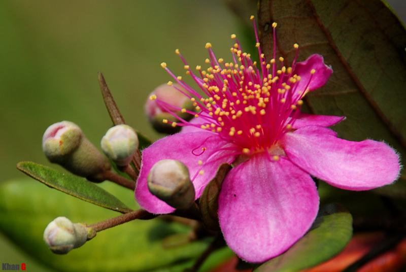 Sim flower